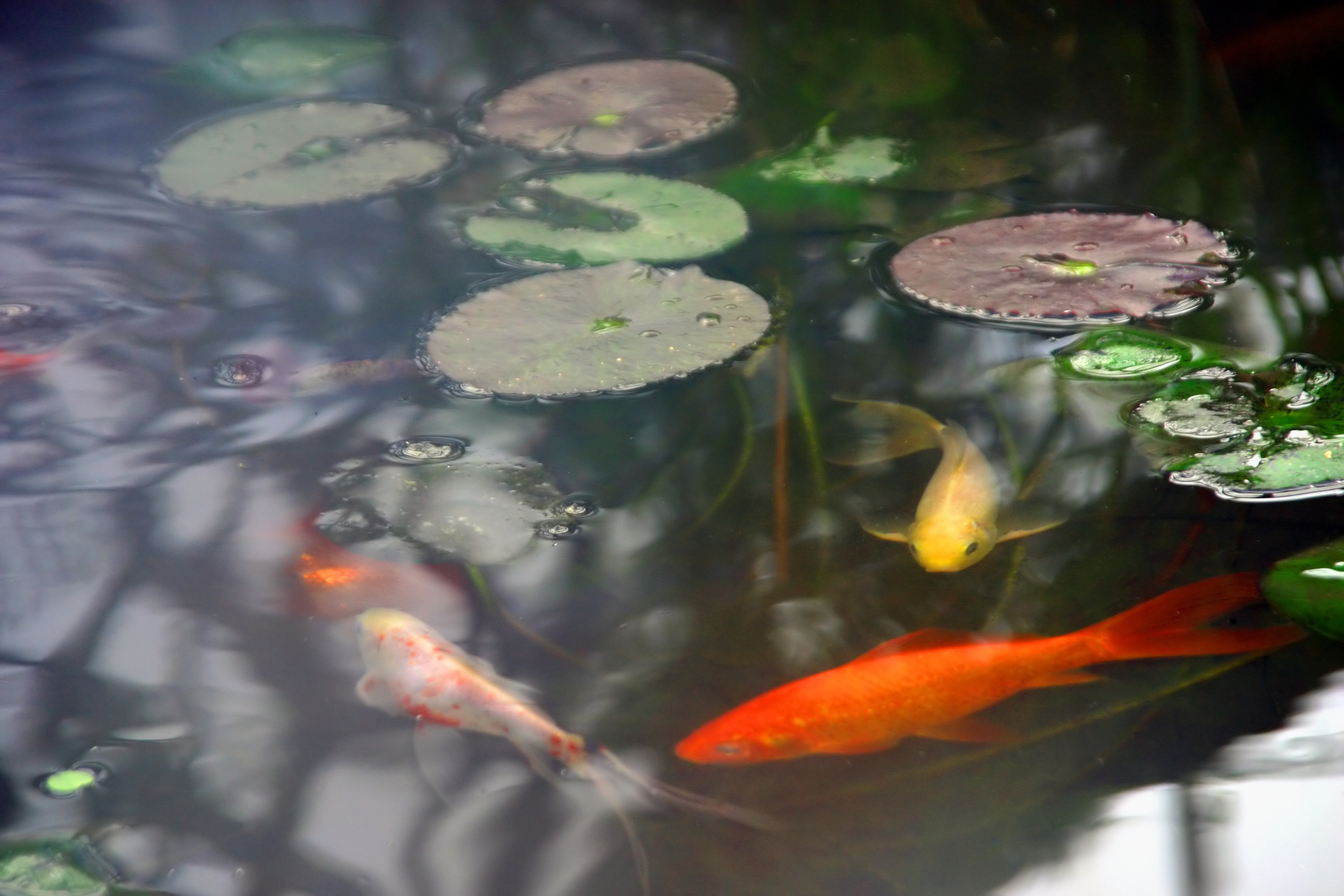 Spruce up your backyard with these 10 tips homefolio for Backyard pond depth